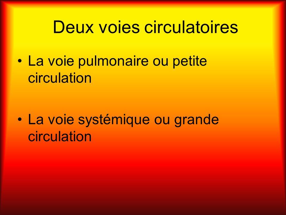 Deux voies circulatoires La voie pulmonaire ou petite circulation La voie systémique ou grande circulation