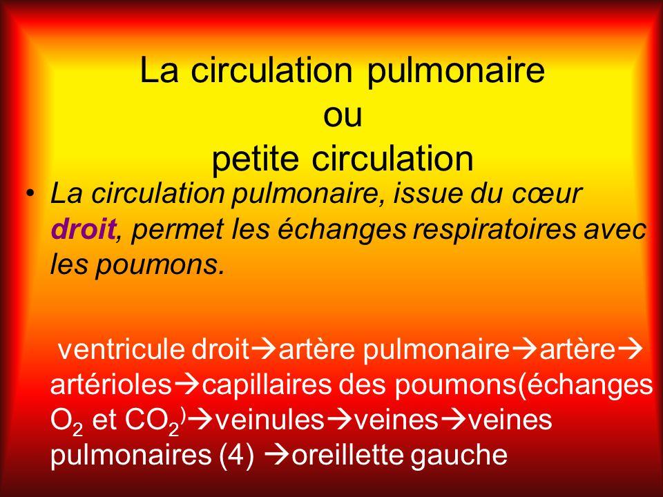 La circulation pulmonaire ou petite circulation La circulation pulmonaire, issue du cœur droit, permet les échanges respiratoires avec les poumons. ve