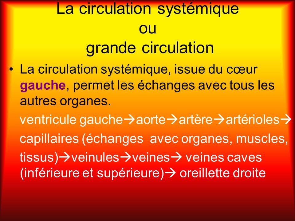 La circulation systémique ou grande circulation La circulation systémique, issue du cœur gauche, permet les échanges avec tous les autres organes. ven