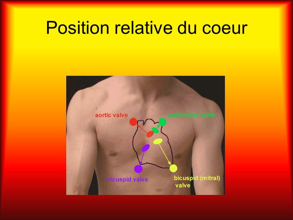 Position relative du coeur