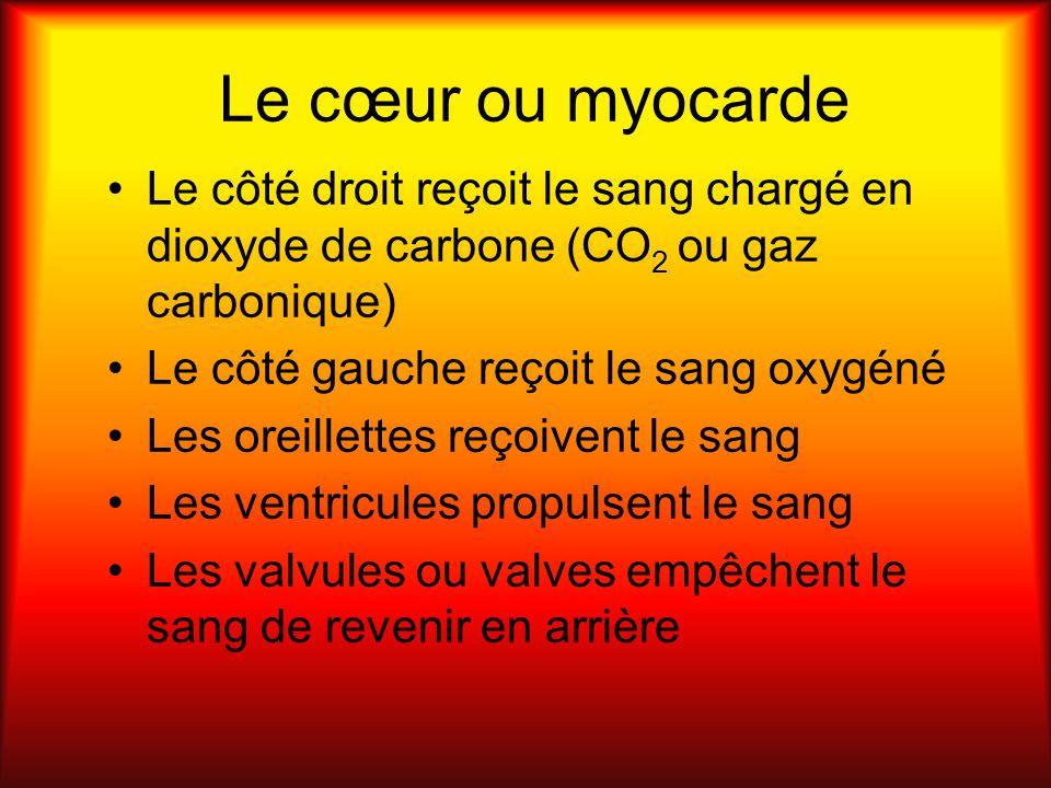 Le cœur ou myocarde Le côté droit reçoit le sang chargé en dioxyde de carbone (CO 2 ou gaz carbonique) Le côté gauche reçoit le sang oxygéné Les oreil
