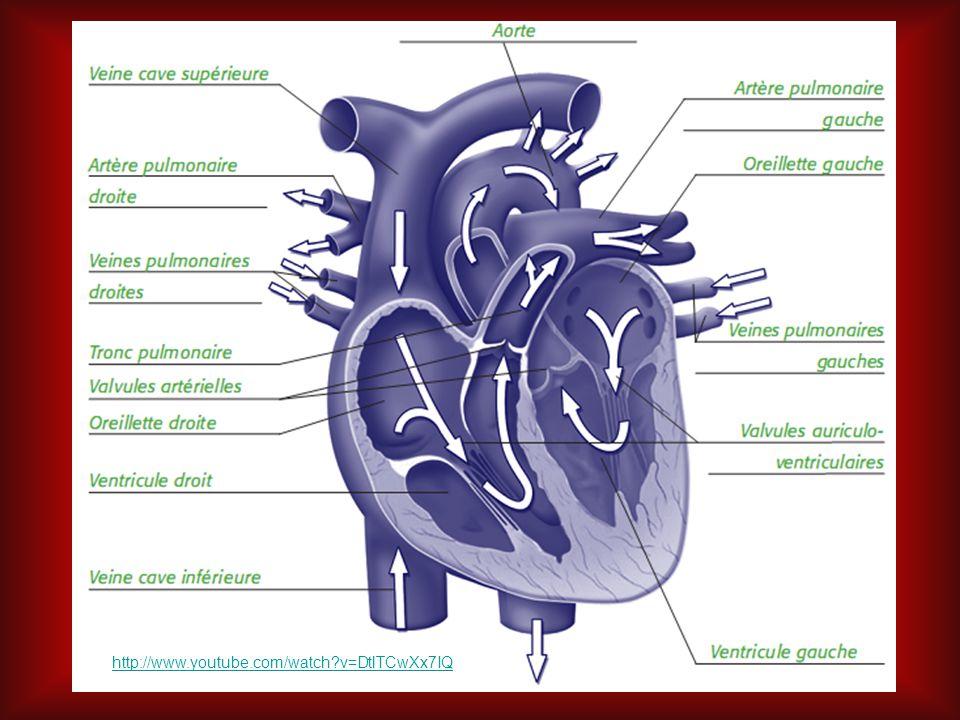 Fréquences cardiaques La fréquence cardiaque au repos se situe entre 60 et 80 battements par minute.