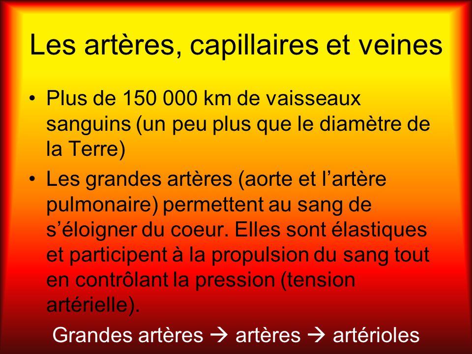 Les artères, capillaires et veines Plus de 150 000 km de vaisseaux sanguins (un peu plus que le diamètre de la Terre) Les grandes artères (aorte et la