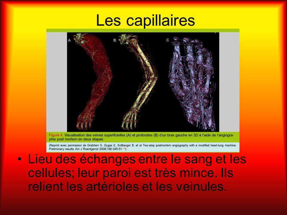 Les capillaires Lieu des échanges entre le sang et les cellules; leur paroi est très mince. Ils relient les artérioles et les veinules.