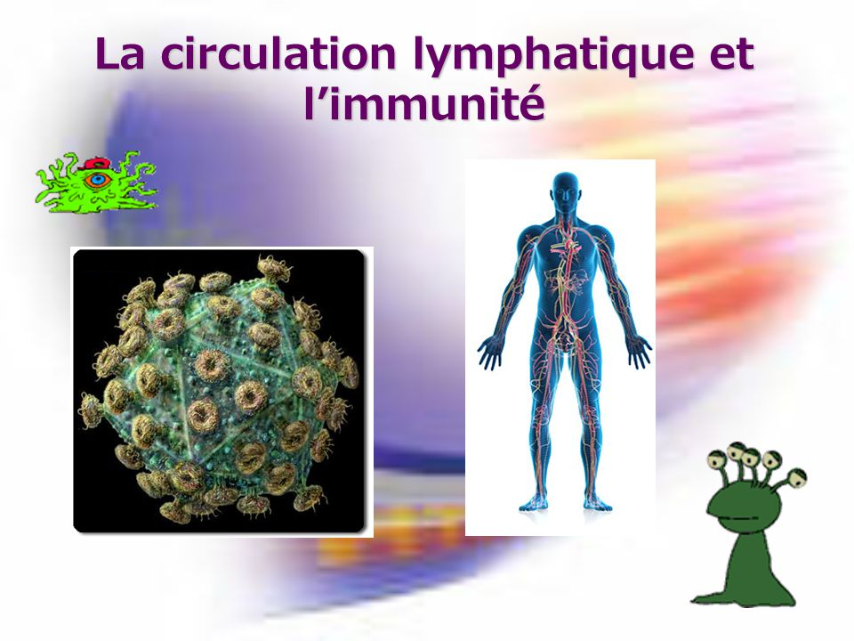 La circulation lymphatique et limmunité
