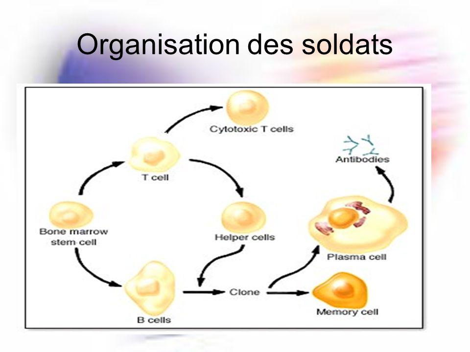 Organisation des soldats