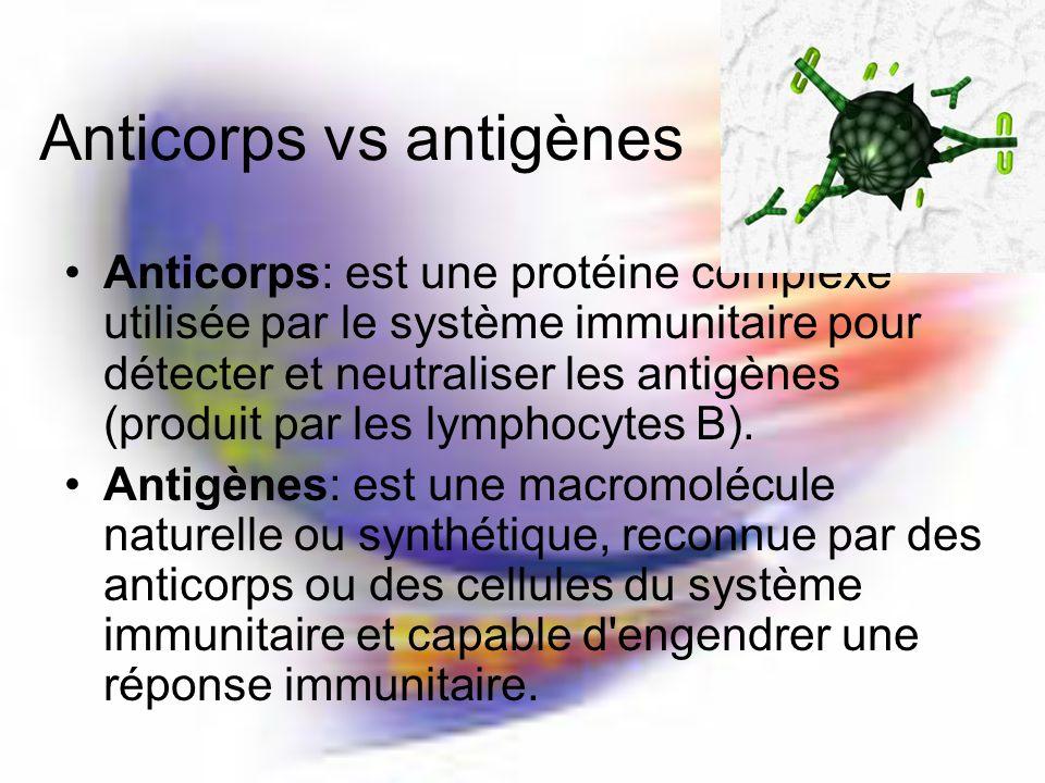 Anticorps vs antigènes Anticorps: est une protéine complexe utilisée par le système immunitaire pour détecter et neutraliser les antigènes (produit par les lymphocytes B).
