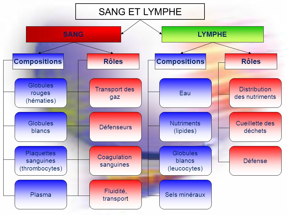 SANG ET LYMPHE SANGLYMPHE CompositionsRôlesCompositionsRôles Globules rouges (hématies) Globules blancs Plaquettes sanguines (thrombocytes) Plasma Tra