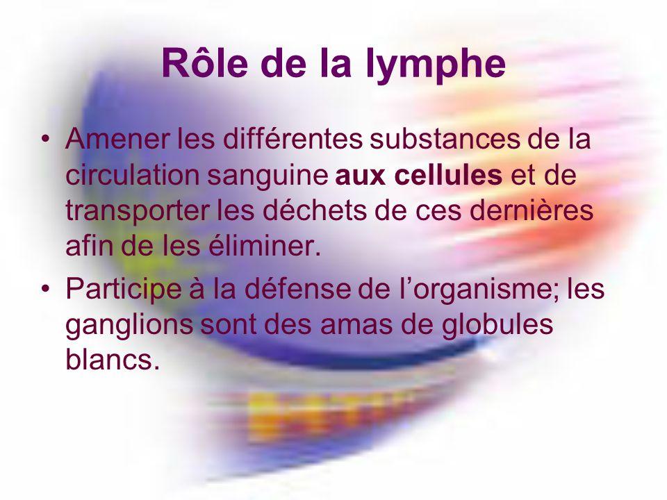 Rôle de la lymphe Amener les différentes substances de la circulation sanguine aux cellules et de transporter les déchets de ces dernières afin de les éliminer.