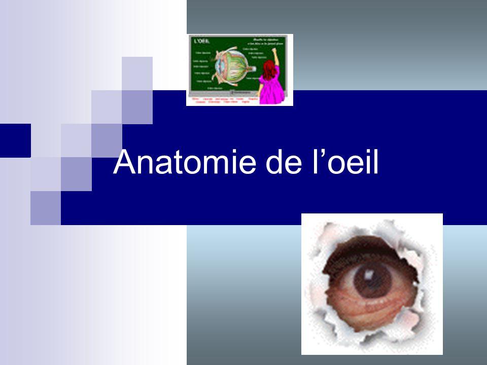 Anatomie de loeil