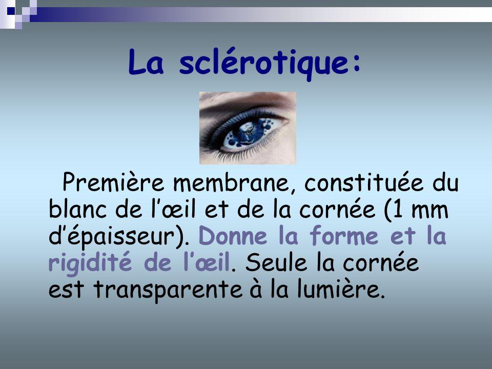 La sclérotique: Première membrane, constituée du blanc de lœil et de la cornée (1 mm dépaisseur). Donne la forme et la rigidité de lœil. Seule la corn