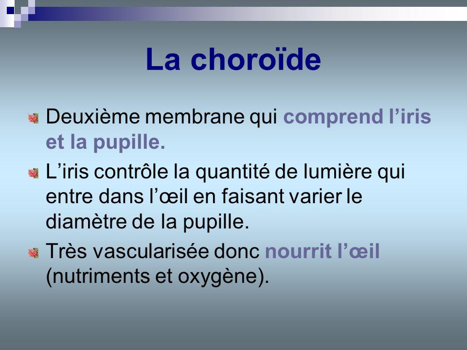 La choroïde Deuxième membrane qui comprend liris et la pupille. Liris contrôle la quantité de lumière qui entre dans lœil en faisant varier le diamètr