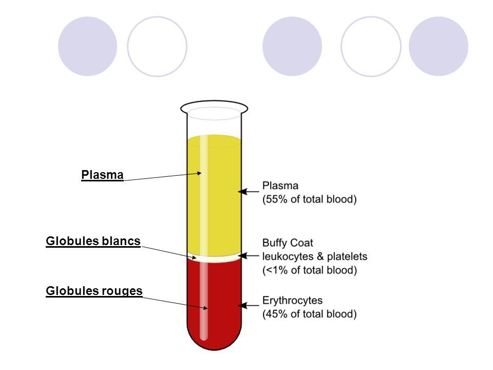 Globules blancs Globules rouges Plasma