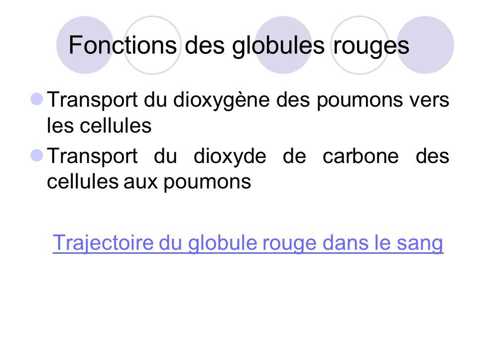 Fonctions des globules rouges Transport du dioxygène des poumons vers les cellules Transport du dioxyde de carbone des cellules aux poumons Trajectoir