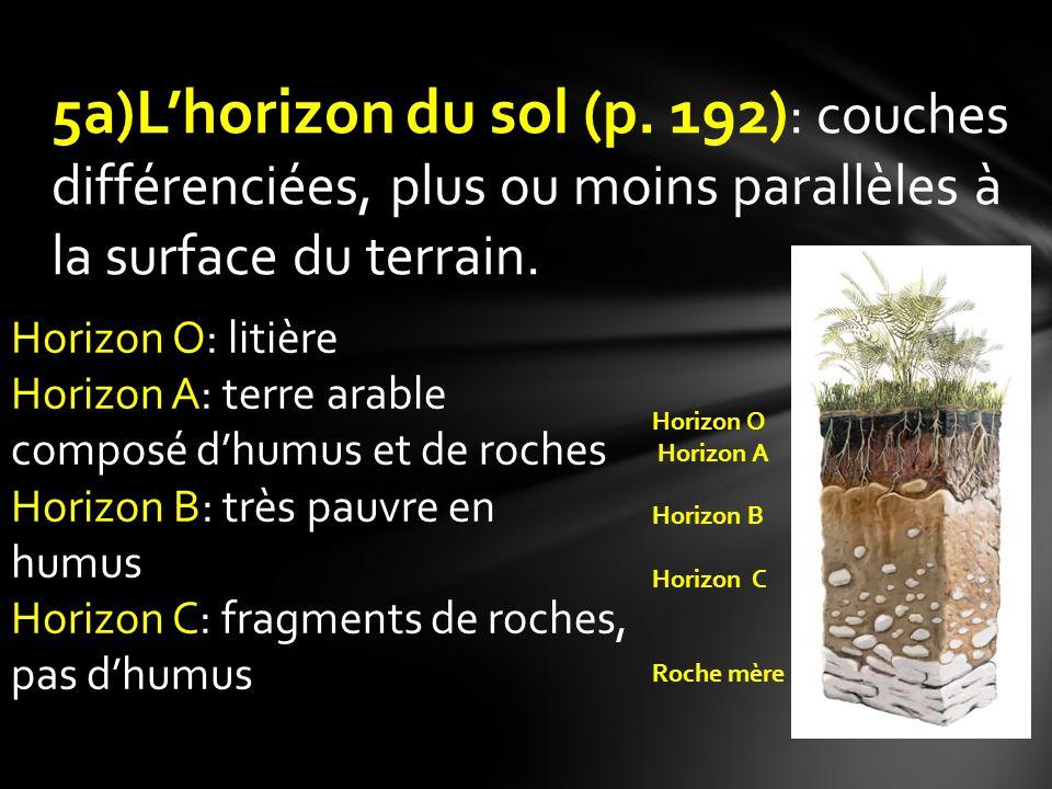 5a)Lhorizon du sol (p. 192) : couches différenciées, plus ou moins parallèles à la surface du terrain. Horizon O Horizon A Horizon B Horizon C Roche m