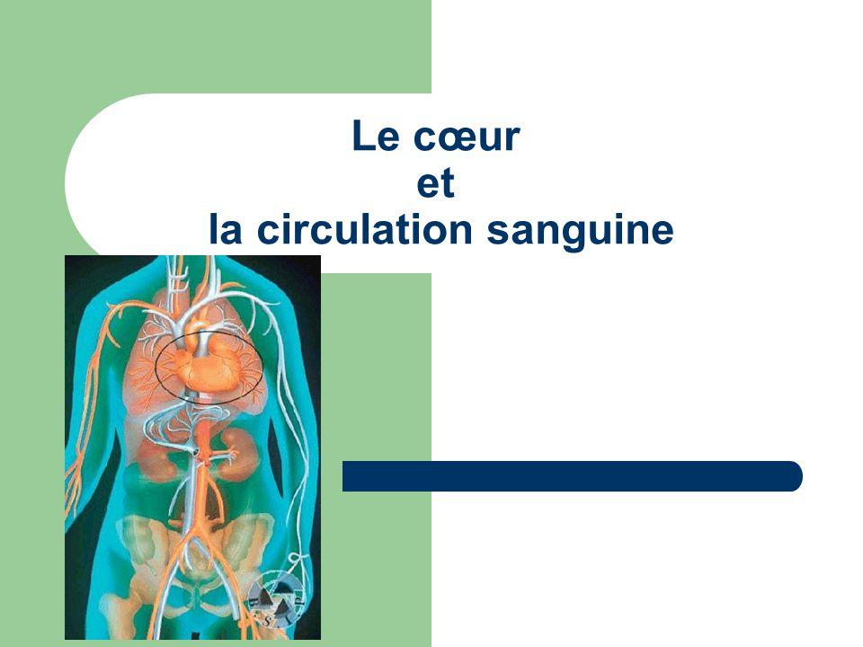 Les veines: Grâce aux contractions musculaires et aux valvules (empêchent le sang de revenir en arrière), permettent au sang de progresser vers le cœur.