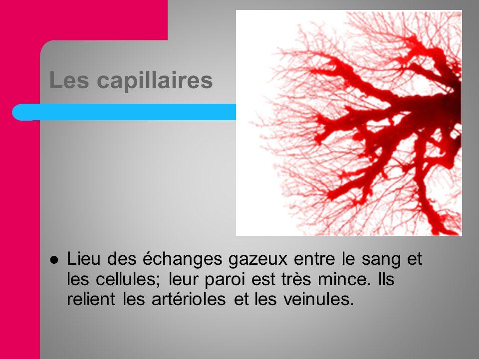 Les capillaires Lieu des échanges gazeux entre le sang et les cellules; leur paroi est très mince. Ils relient les artérioles et les veinules.