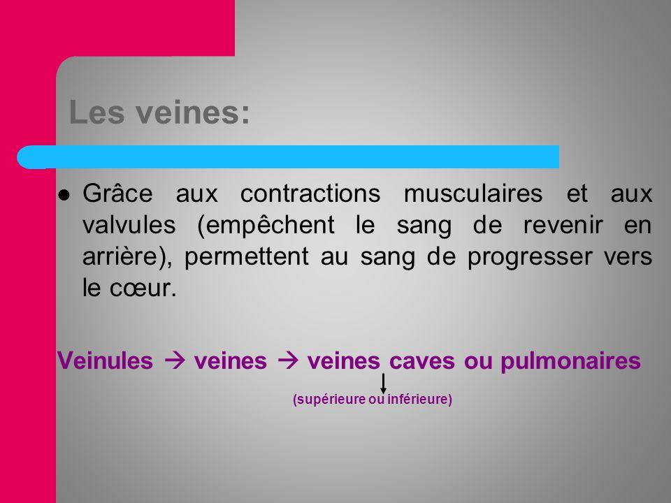 Les veines: Grâce aux contractions musculaires et aux valvules (empêchent le sang de revenir en arrière), permettent au sang de progresser vers le cœu