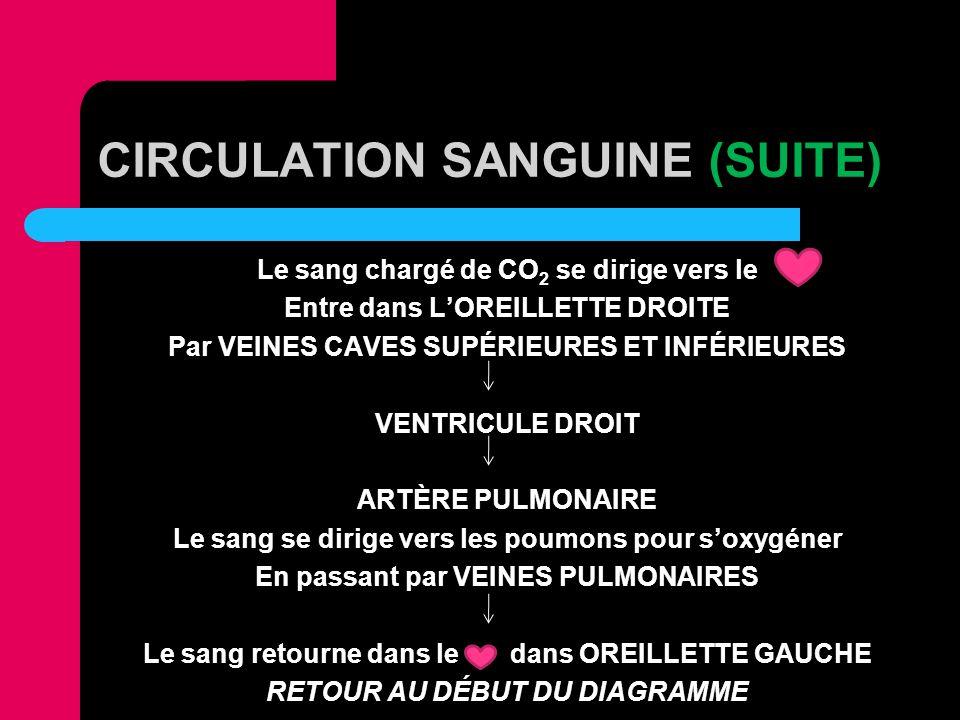CIRCULATION SANGUINE (SUITE) Le sang chargé de CO 2 se dirige vers le Entre dans LOREILLETTE DROITE Par VEINES CAVES SUPÉRIEURES ET INFÉRIEURES VENTRI