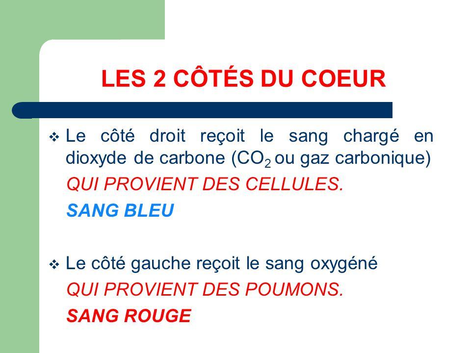 LES 2 CÔTÉS DU COEUR Le côté droit reçoit le sang chargé en dioxyde de carbone (CO 2 ou gaz carbonique) QUI PROVIENT DES CELLULES. SANG BLEU Le côté g