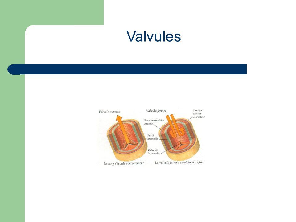 1) Oreillette droiteOreillette droite 2) Oreillette gaucheOreillette gauche 3) Veine cave supérieureVeine cave supérieure 4) AorteAorte 5) Artère pulmonaireArtère pulmonaire 6) Veine pulmonaireVeine pulmonaire 7) Valve mitrale (auriculo-ventriculaire)Valve mitrale (auriculo-ventriculaire) 8) Valve aortiqueValve aortique 9) Ventricule gaucheVentricule gauche 10) Ventricule droitVentricule droit 11) Veine cave inférieureVeine cave inférieure 12) Valve tricuspide (auriculo-ventriculaire)Valve tricuspide (auriculo-ventriculaire) 13) Valve sigmoïde (pulmonaire)Valve sigmoïde (pulmonaire) ANATOMIE DU CŒUR