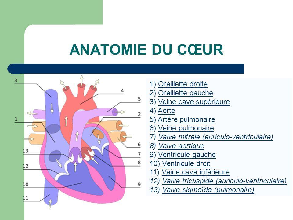 1) Oreillette droiteOreillette droite 2) Oreillette gaucheOreillette gauche 3) Veine cave supérieureVeine cave supérieure 4) AorteAorte 5) Artère pulm