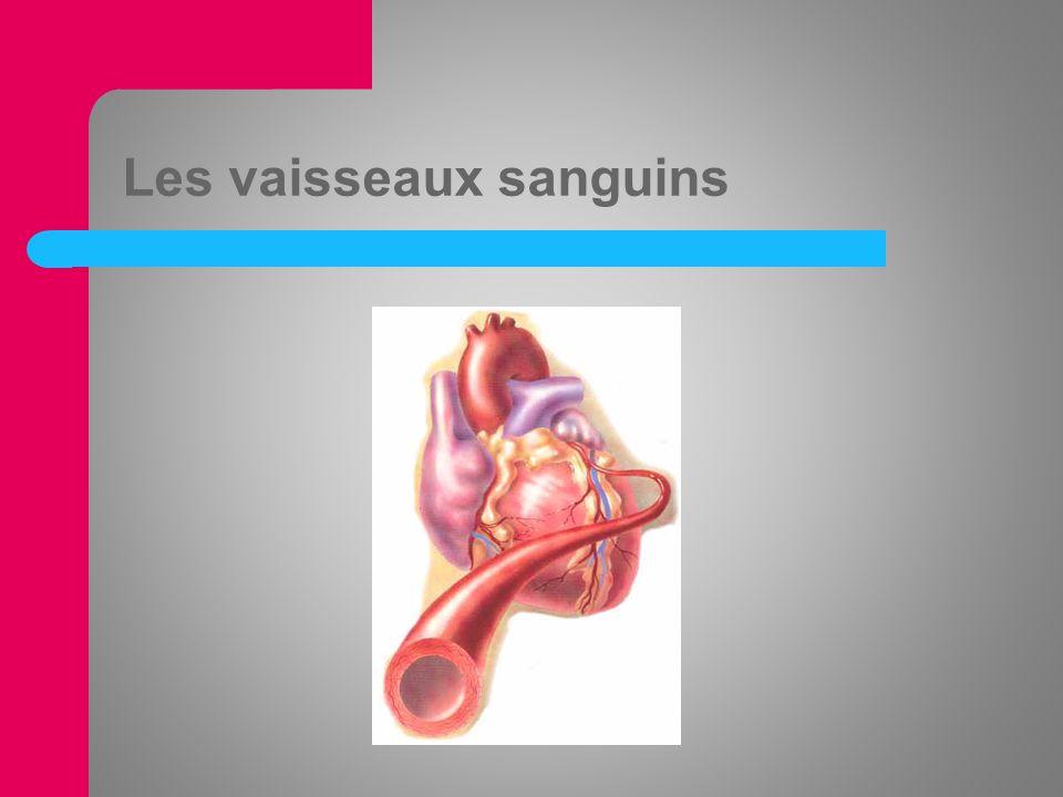 Les artères, capillaires et veines Plus de 150 000 km de vaisseaux sanguins Les grandes artères (aorte et lartère pulmonaire) permettent au sang de séloigner du cœur.