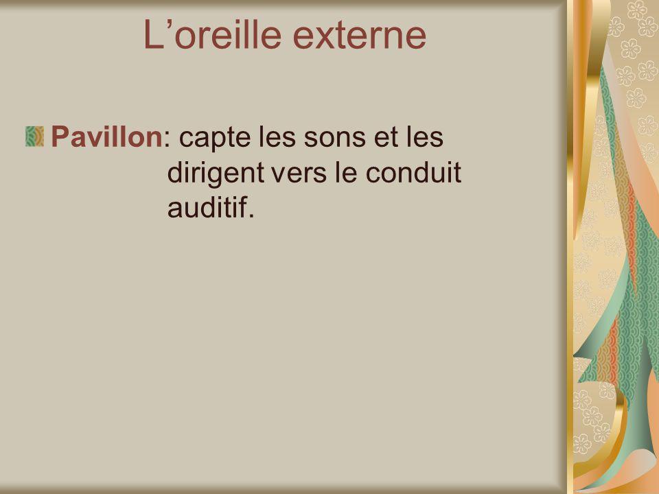 Loreille externe Pavillon: capte les sons et les dirigent vers le conduit auditif.