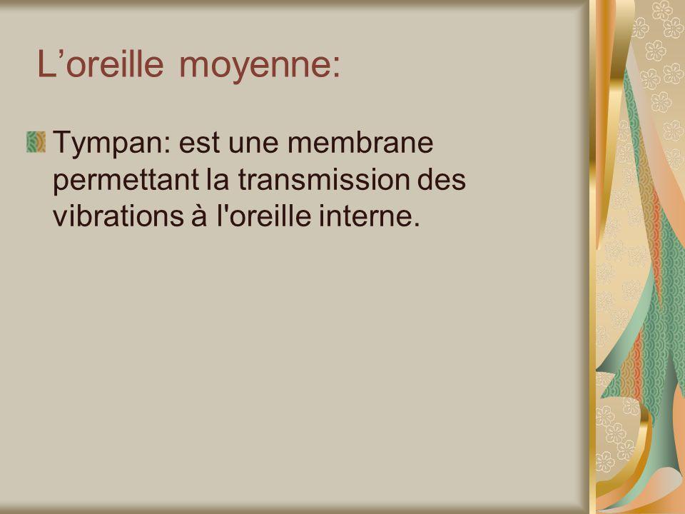 Loreille moyenne: Tympan: est une membrane permettant la transmission des vibrations à l oreille interne.