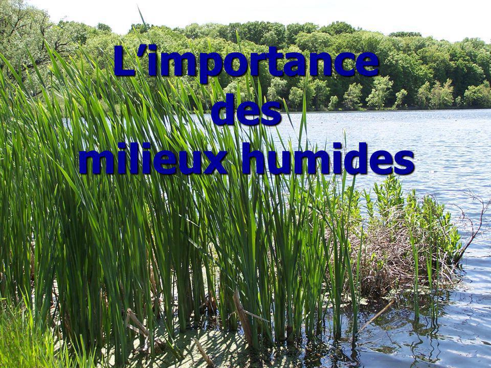 Limportance des milieux humides