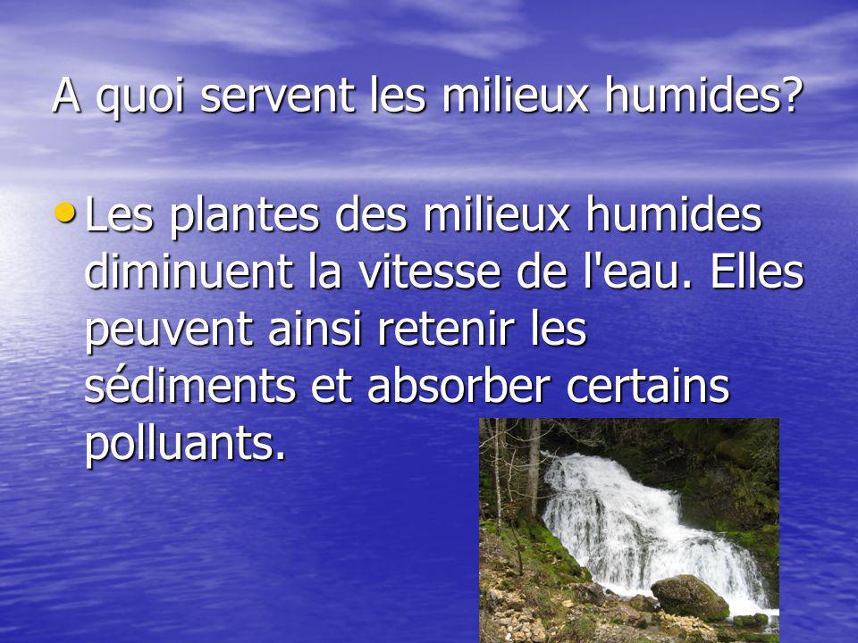 A quoi servent les milieux humides.Les plantes des milieux humides diminuent la vitesse de l eau.