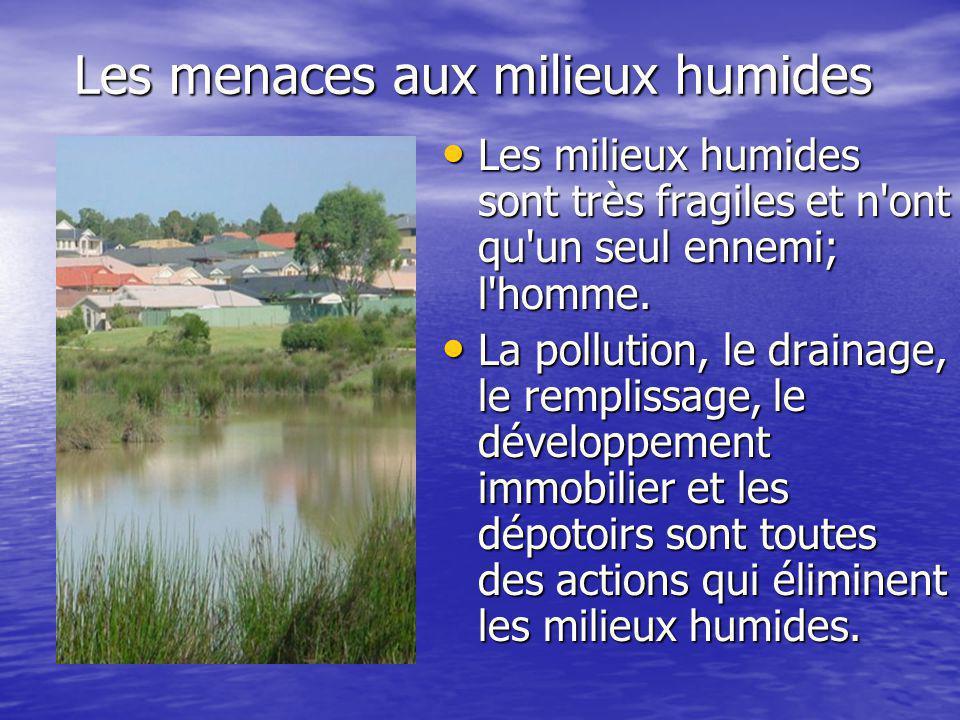 Les menaces aux milieux humides Les milieux humides sont très fragiles et n ont qu un seul ennemi; l homme.
