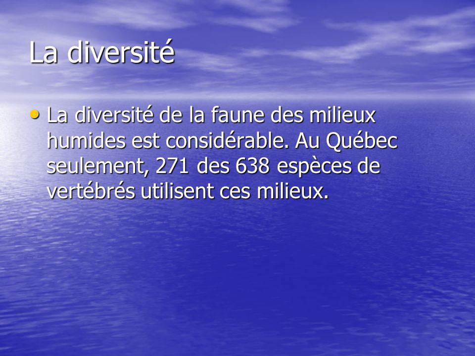 La diversité La diversité de la faune des milieux humides est considérable.