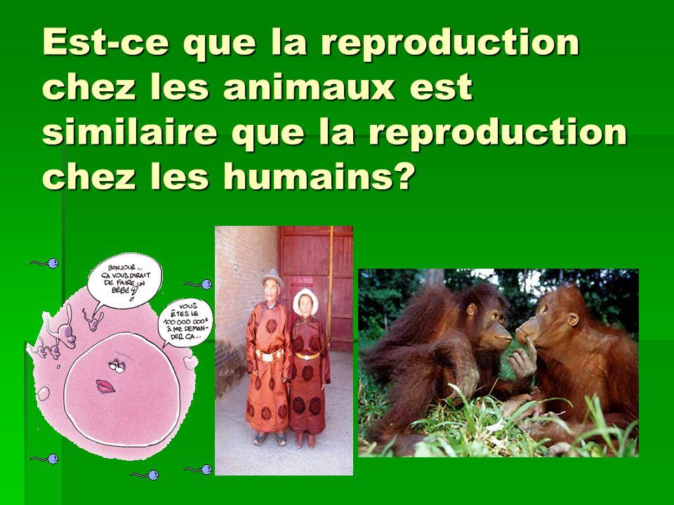 Est-ce que la reproduction chez les animaux est similaire que la reproduction chez les humains?