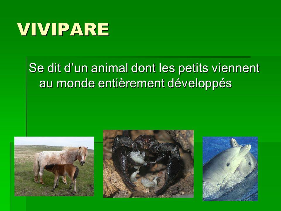 VIVIPARE Se dit dun animal dont les petits viennent au monde entièrement développés
