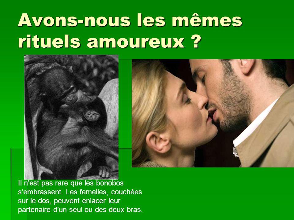 Avons-nous les mêmes rituels amoureux ? Il nest pas rare que les bonobos sembrassent. Les femelles, couchées sur le dos, peuvent enlacer leur partenai