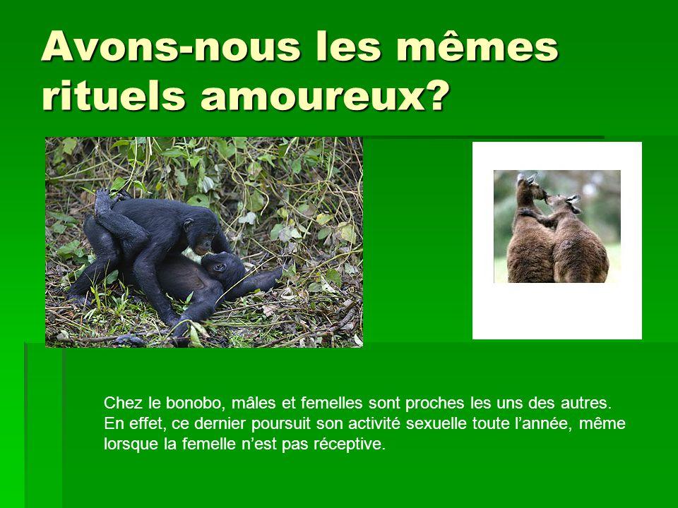 Avons-nous les mêmes rituels amoureux? Chez le bonobo, mâles et femelles sont proches les uns des autres. En effet, ce dernier poursuit son activité s