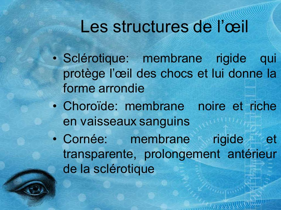 Les structures de lœil Sclérotique: membrane rigide qui protège lœil des chocs et lui donne la forme arrondie Choroïde: membrane noire et riche en vaisseaux sanguins Cornée: membrane rigide et transparente, prolongement antérieur de la sclérotique