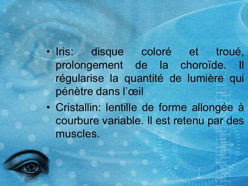 Iris: disque coloré et troué, prolongement de la choroïde. Il régularise la quantité de lumière qui pénètre dans lœil Cristallin: lentille de forme al