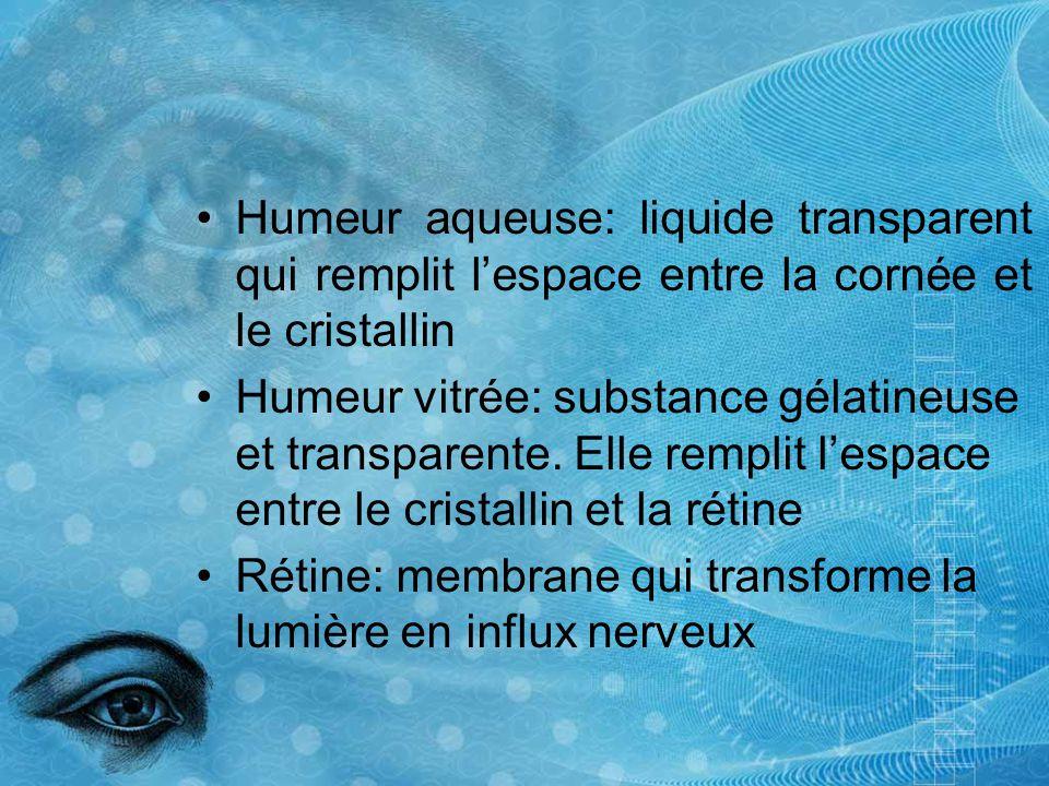Humeur aqueuse: liquide transparent qui remplit lespace entre la cornée et le cristallin Humeur vitrée: substance gélatineuse et transparente. Elle re