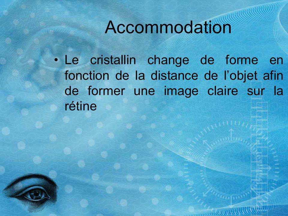 Accommodation Le cristallin change de forme en fonction de la distance de lobjet afin de former une image claire sur la rétine