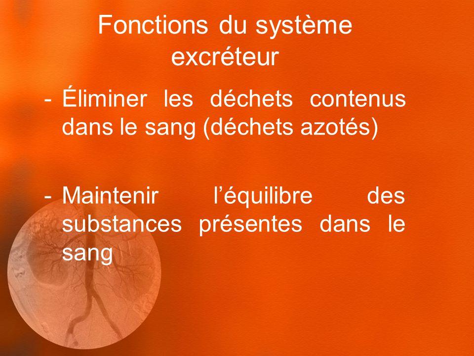 Fonctions du système excréteur -Éliminer les déchets contenus dans le sang (déchets azotés) -Maintenir léquilibre des substances présentes dans le sang
