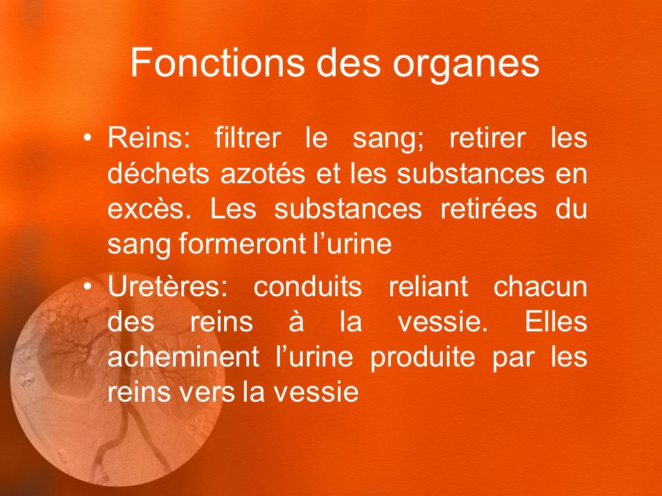Fonctions des organes Reins: filtrer le sang; retirer les déchets azotés et les substances en excès. Les substances retirées du sang formeront lurine