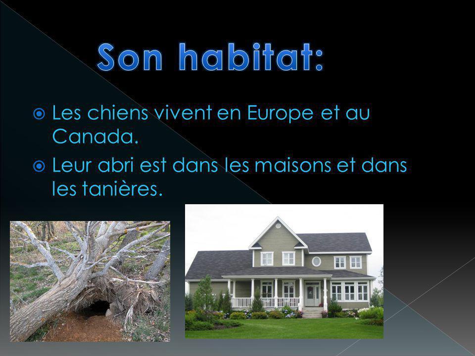 Les chiens vivent en Europe et au Canada. Leur abri est dans les maisons et dans les tanières.