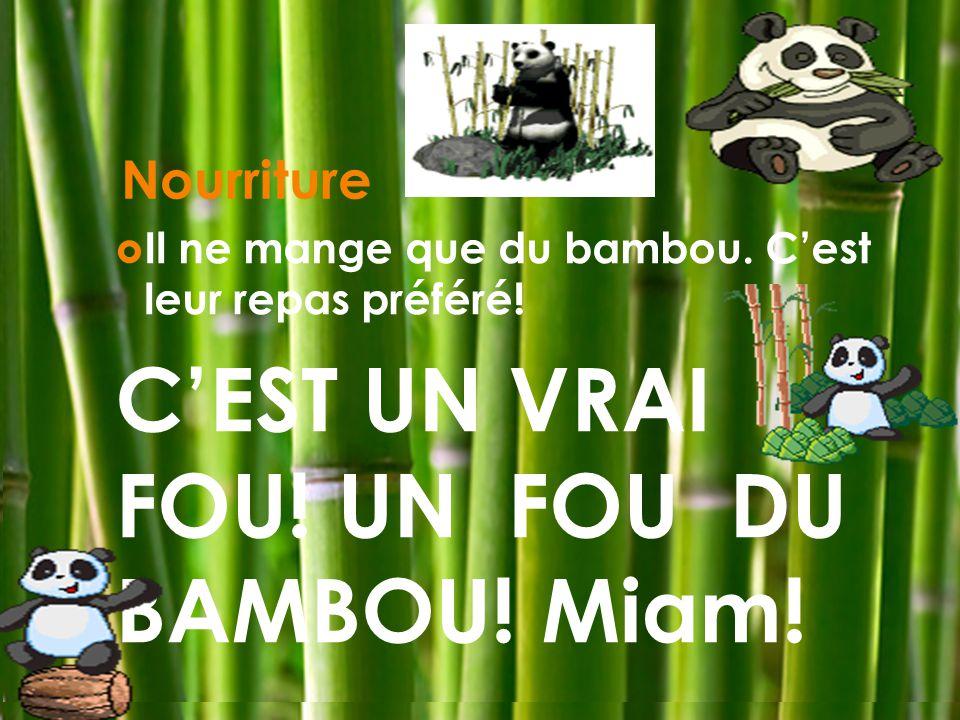 Nourriture Il ne mange que du bambou. Cest leur repas préféré! CEST UN VRAI FOU! UN FOU DU BAMBOU! Miam!