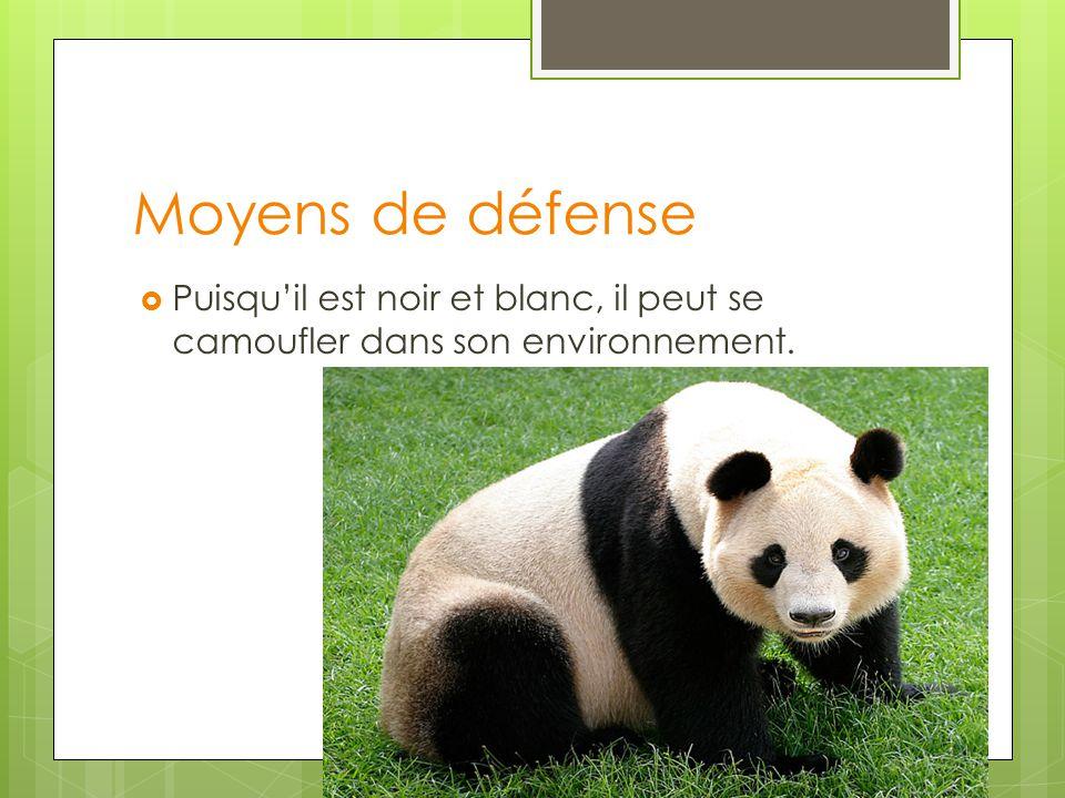 Moyens de défense Puisquil est noir et blanc, il peut se camoufler dans son environnement.