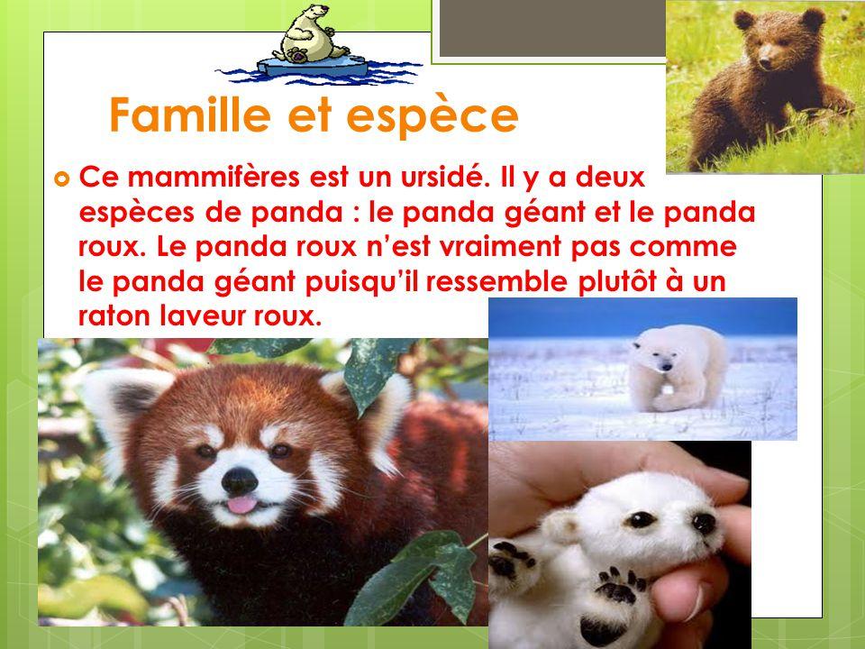 Famille et espèce Ce mammifères est un ursidé. Il y a deux espèces de panda : le panda géant et le panda roux. Le panda roux nest vraiment pas comme l