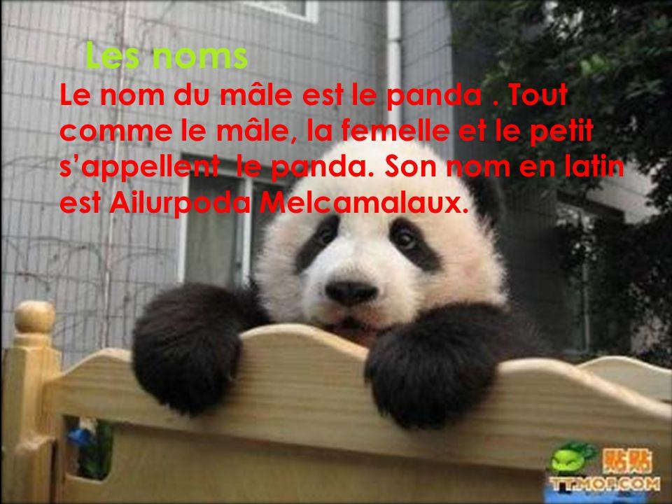 Les noms Le nom du mâle est le panda. Tout comme le mâle, la femelle et le petit sappellent le panda. Son nom en latin est Ailurpoda Melcamalaux.