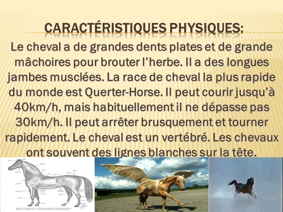 Le cheval a de grandes dents plates et de grande mâchoires pour brouter lherbe. Il a des longues jambes musclées. La race de cheval la plus rapide du