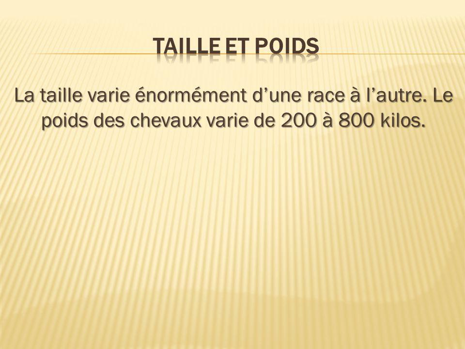 La taille varie énormément dune race à lautre. Le poids des chevaux varie de 200 à 800 kilos.